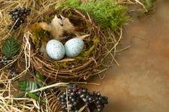 Граница весеннего времени с гнездом Стоковое Фото