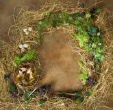 Граница весны с пустым гнездом Стоковые Изображения