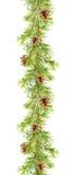 Граница ели - ветви сосны с конусами Рамка акварели Стоковые Изображения