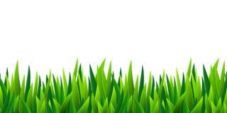 Граница зеленой травы безшовная Стоковое Изображение RF