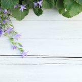 Граница листьев зеленого цвета и фиолетовых цветков Стоковые Изображения