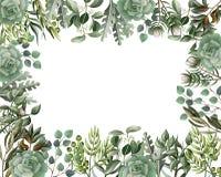 Граница и рамка с листьями и succulent в стиле акварели Евкалипт, магнолия, папоротник и другая иллюстрация вектора бесплатная иллюстрация