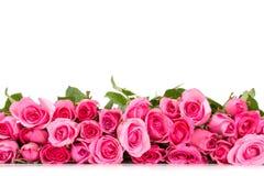 граница красивой свежей сладостной розы пинка для влюбленности романтичной Стоковое фото RF