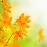 Граница красивых цветков желтая. Флористический дизайн Стоковая Фотография