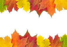 Граница кленового листа осени Стоковые Изображения RF