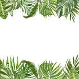 Граница листьев и заводов акварели тропическая Рука покрасила растительность и листву лета экзотические на белой предпосылке бесплатная иллюстрация