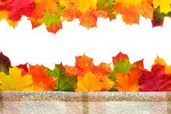 Граница листьев осени Стоковое Изображение