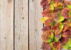 Граница листьев осени стоковое фото rf