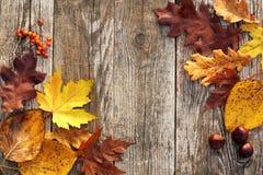 Граница листьев осени стоковые изображения rf
