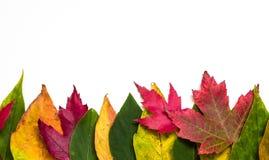 Граница листьев осени Стоковая Фотография