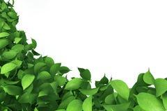 Граница листьев Стоковое фото RF