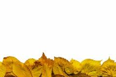 Граница листьев стоковое фото