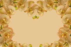 Граница орхидеи для приглашений etc Стоковое Изображение