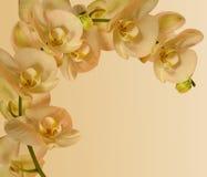 Граница орхидеи для приглашений etc Стоковые Фото