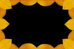 граница осени выходит желтый цвет Стоковые Изображения