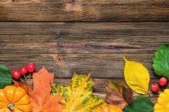 Граница осени с упаденными листьями и тыквами Стоковые Фотографии RF