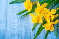 Граница от желтых narcissus или daffodil цветет на предпосылке аквамарина деревянной Селективный фокус установьте текст тонизиров Стоковое фото RF