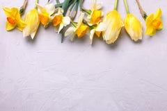 Граница от желтых narcissus и тюльпанов цветет на серой текстуре Стоковое Фото
