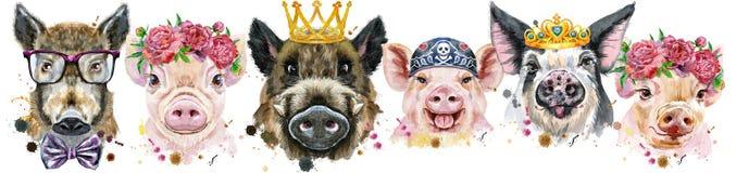 Граница от свиней Портреты акварели свиней и хряков иллюстрация вектора