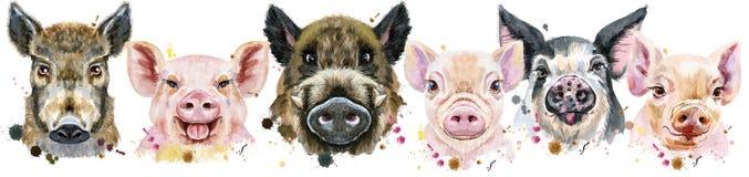 Граница от свиней Портреты акварели свиней и хряков бесплатная иллюстрация