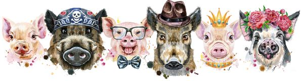 Граница от свиней Портреты акварели свиней и хряков иллюстрация штока