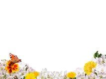 Граница от цветков на белой изолированной предпосылке Стоковые Фотографии RF