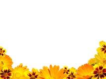 Граница от цветков на белой изолированной предпосылке Стоковая Фотография RF