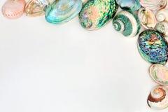Граница предпосылки Seashell стоковые изображения