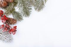 Граница рамки рождества на белизне, ветвях, конусах и красных ягодах Стоковые Фото
