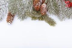 Граница рамки рождества на белизне, ветвях, конусах и красных ягодах Стоковое Фото