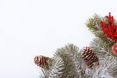 Граница рамки рождества на белизне, ветвях, конусах и красных ягодах Стоковые Изображения