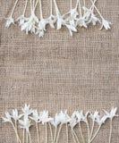 Граница рамки цветка на коричневой естественной предпосылке Стоковые Фотографии RF