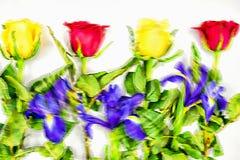 Граница рамки цветка Стоковое Изображение RF