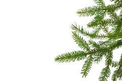 Граница рождества вечнозеленая с ветвью ели Стоковая Фотография RF