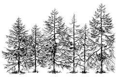 Граница соснового леса иллюстрация вектора