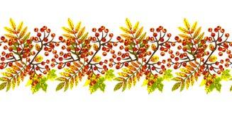 Граница с листьями осени и пуками рябины Стоковое Фото