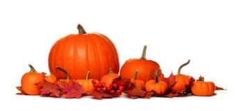Граница тыкв осени и листьев падения изолированная на белизне Стоковое Фото