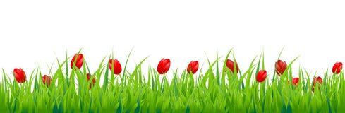 Граница тюльпана Стоковое Изображение RF