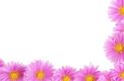 граница флористическая Стоковая Фотография RF