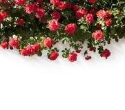 граница флористическая стоковое фото