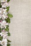 Граница цветений Яблока Стоковые Изображения
