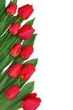 граница цветет красная весна стоковое фото