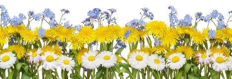 граница цветет реальная весна стоковые изображения