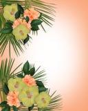 граница цветет hibiscus тропический Стоковое фото RF