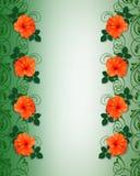 граница цветет hibiscus тропический Стоковые Изображения RF