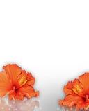 граница цветет hibiscus тропический Стоковые Фото