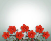 граница цветет hibiscus тропический Стоковая Фотография