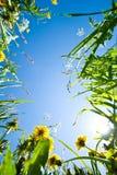 Граница цветка Стоковая Фотография RF