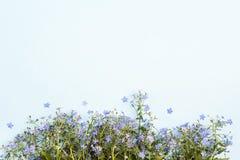 Граница цветков незабудки на голубой предпосылке стоковое изображение rf