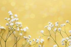 Граница чувствительных маленьких белых цветков на желтой предпосылке Стоковое Изображение